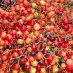 Kashmiri-Cherry2