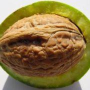Walnut-Shells