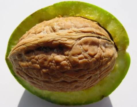 Walnut-Shells