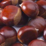 Chestnut01